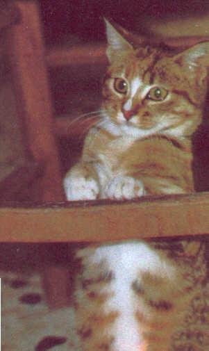 Lu surci e lu attu / Il topo e il gatto